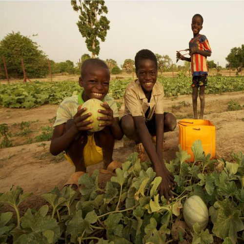 Image for Sustainable Agriculture & Water Management